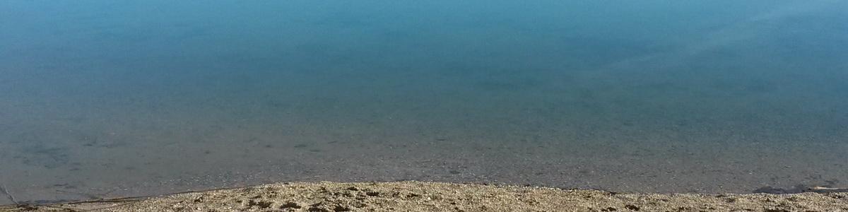 B-schwimmen